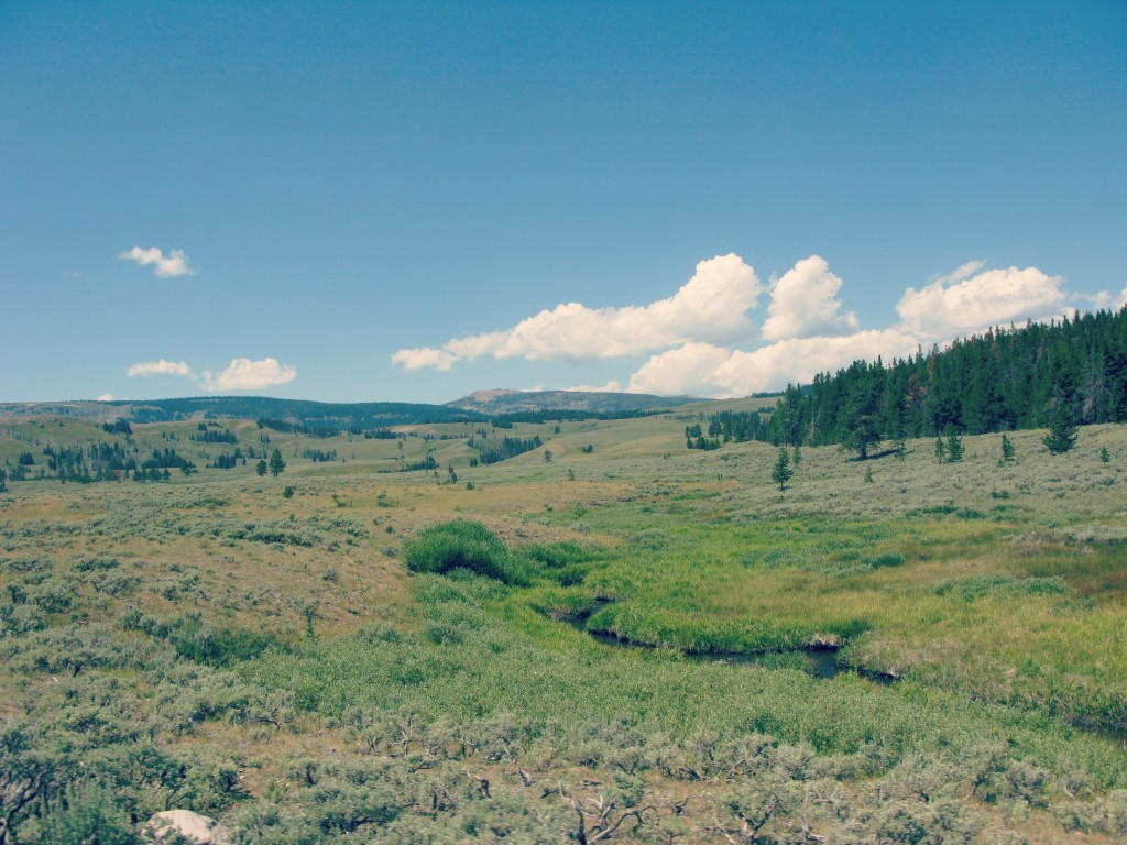 natural landscape of yellowstone national park