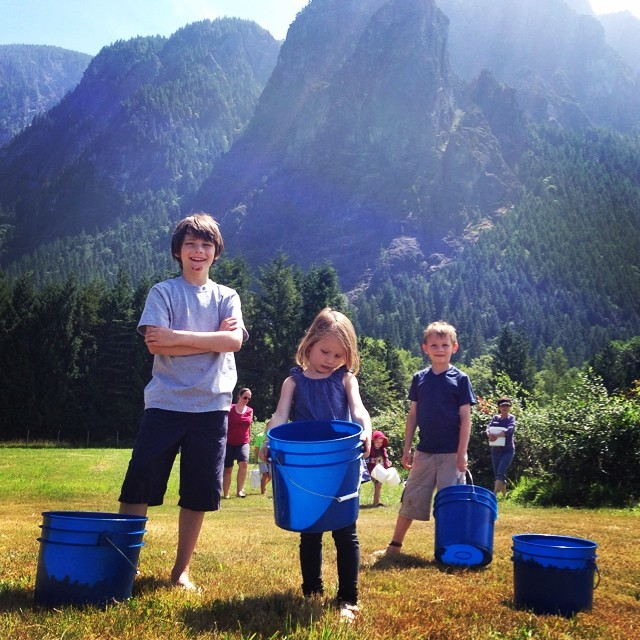 #pickingblueberries at the base of Mount Si in North Bend - one of our new #familytraditions