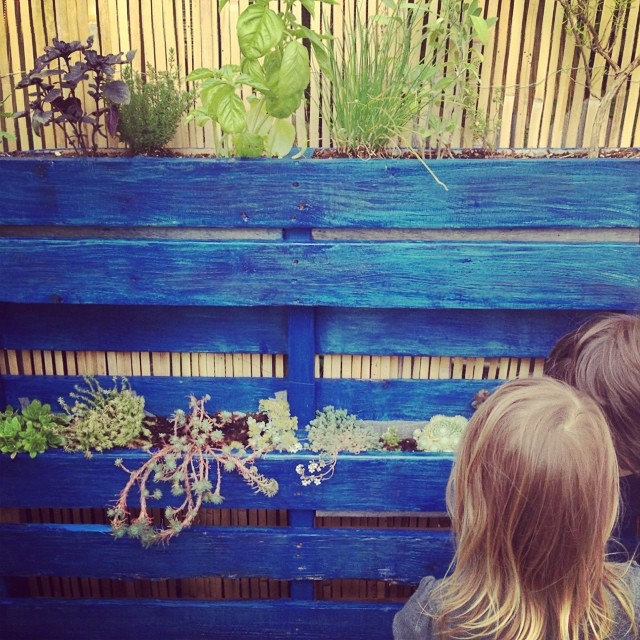 Enjoying the #succulents off the sidewalk in a blue painted #pallet turned planter box.  I love seeing people's #creativity on display!